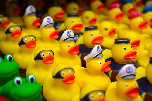duck  bath duck  toys
