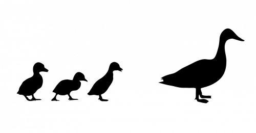 Duck & Ducklings Silhouette
