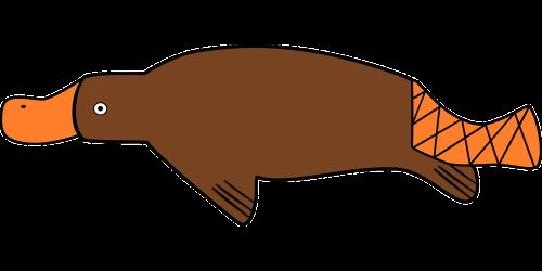 duck-billed platypus platypus duck billed
