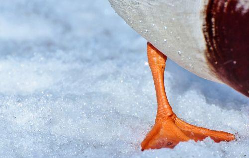 duck foot duck fin fin