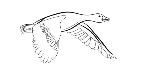 duck outline animal wildlife