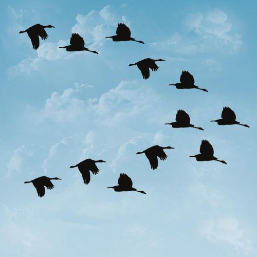 ducks birds sky