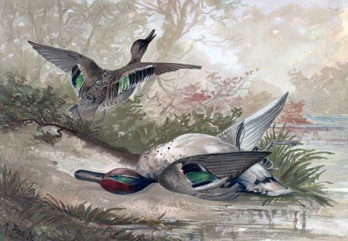 Ducks Vintage Painting
