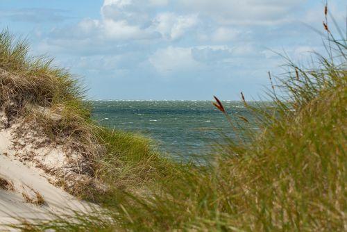 dune sea north sea