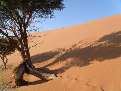 dune namibia desert