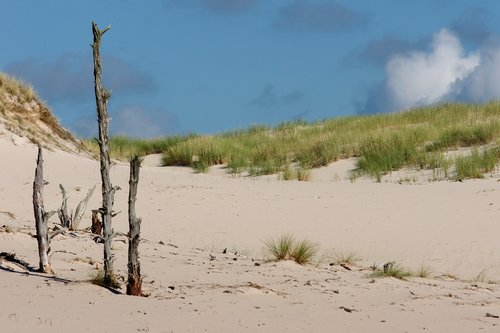 dune  sand dunes  sand