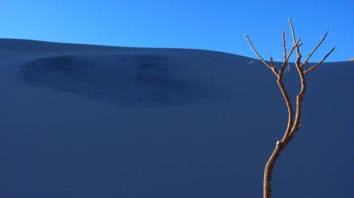 dune sand tree