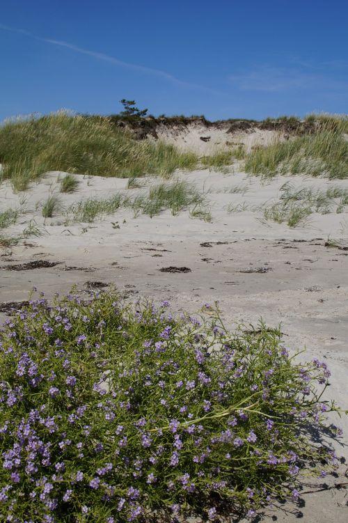 dune dune landscape grasses