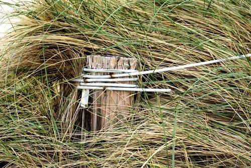 dune grass  dunes  wooden posts