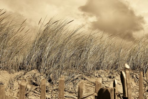 dunes shores beach