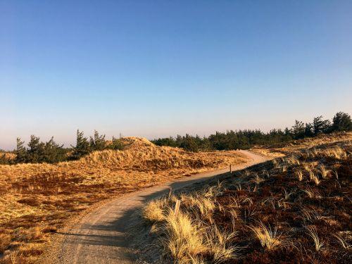 dunes heide pine