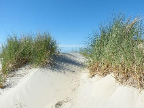 dunes north sea beach
