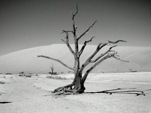dunes dune sea desert