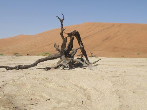 dunes namibia desert