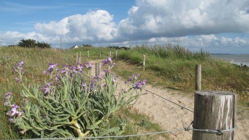 dunes sand dunes atlantic coast
