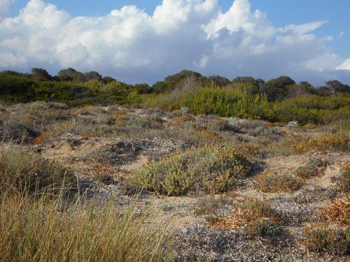 dunes dune landscape landscape