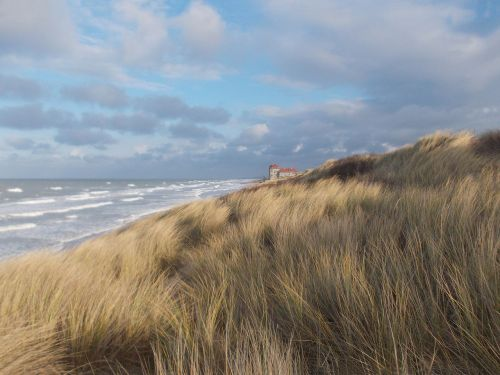 dunes foredune oyats