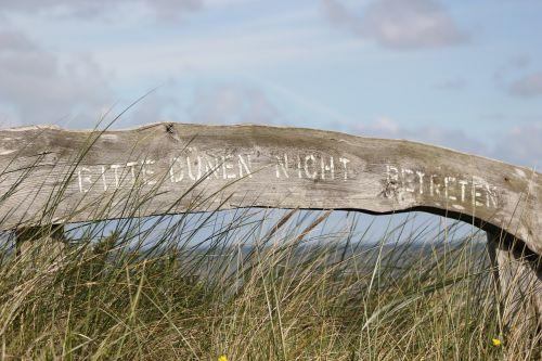dunes north sea grass