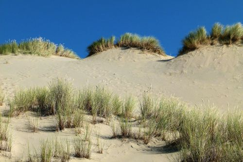 dunes national park oregon usa