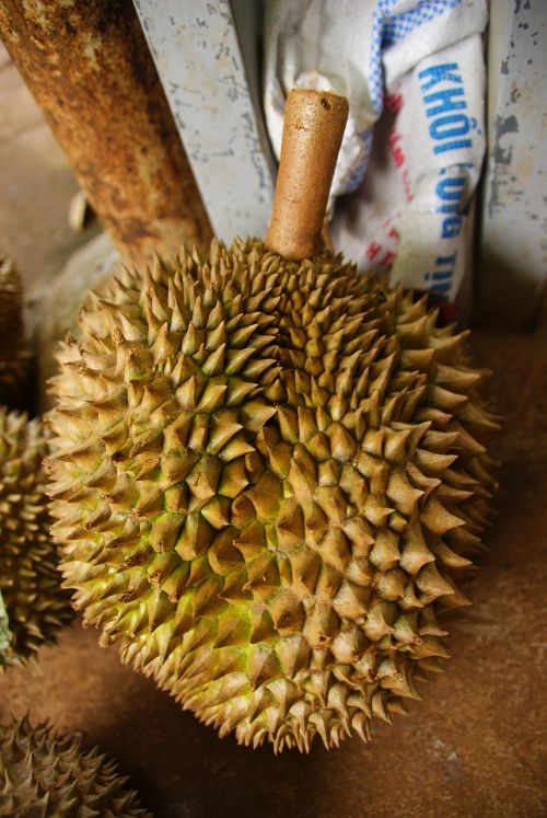 durian exotic fruit