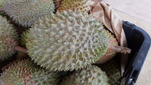 durian fruits sweet