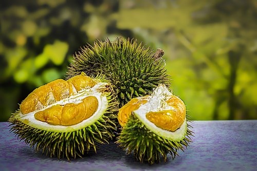 durian  fruit  tropical