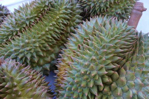 durian  smelly fruit  fruit