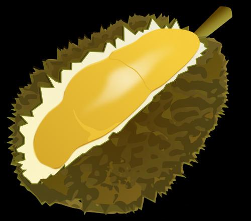 durian fruit fruit food