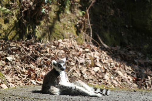 during a break in zoo nagasaki bio park