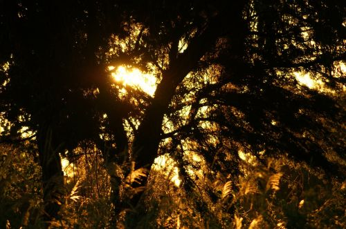 dusk jungle nature