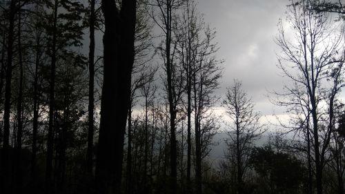 dusk cloud trees