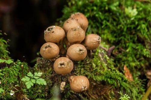 dust mushrooms mushrooms moss