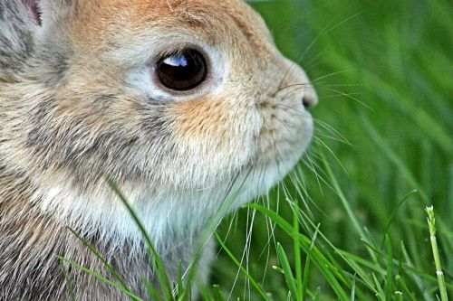 dwarf rabbit rabbit easter