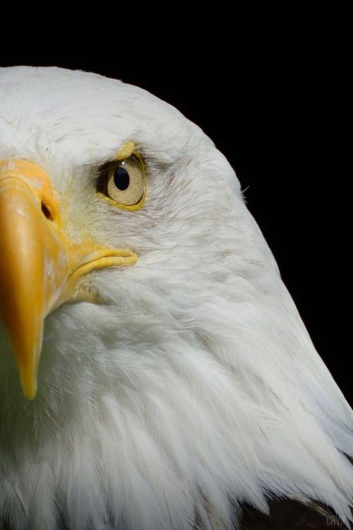 eagle talon barth