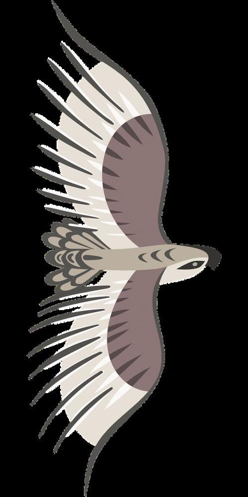 eagle bird wings