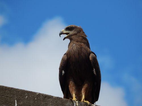 eagle bangalore india