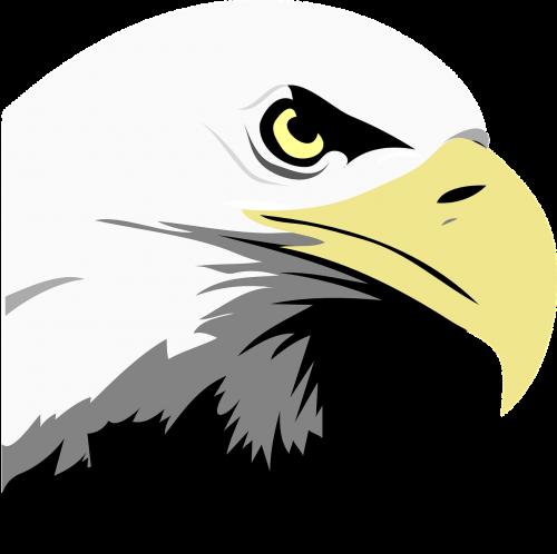 eagle eyes face