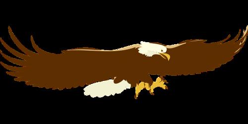 eagle bald landing