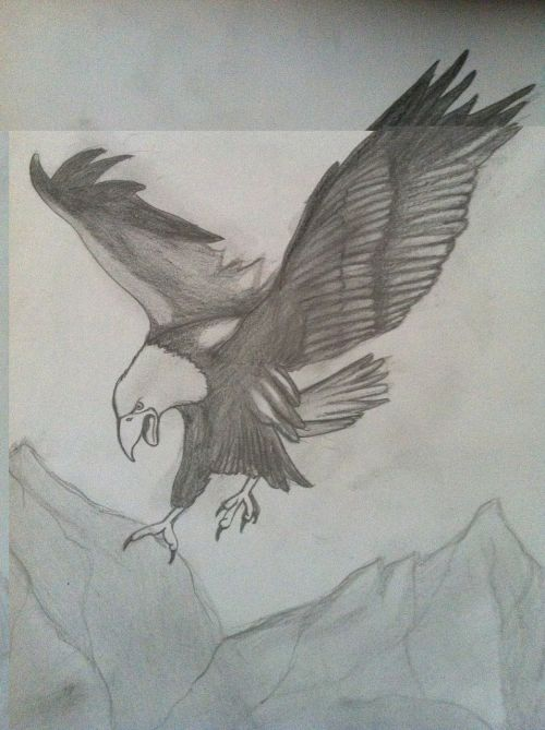 eagle charcoal drawing pencil drawing
