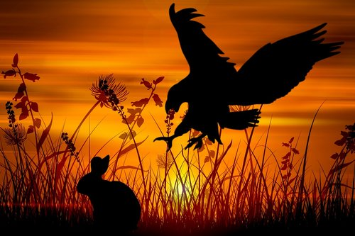 eagle  rabbit  hunt