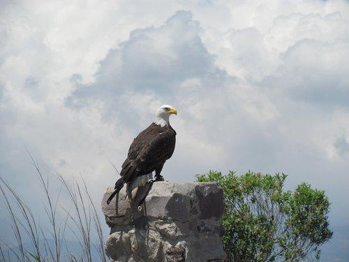 eagle  ave  animals