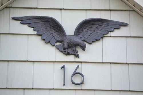 eagle  sixteen  bald eagle
