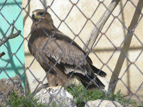 eagle cage raptor