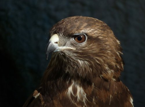 eagle  birds  park