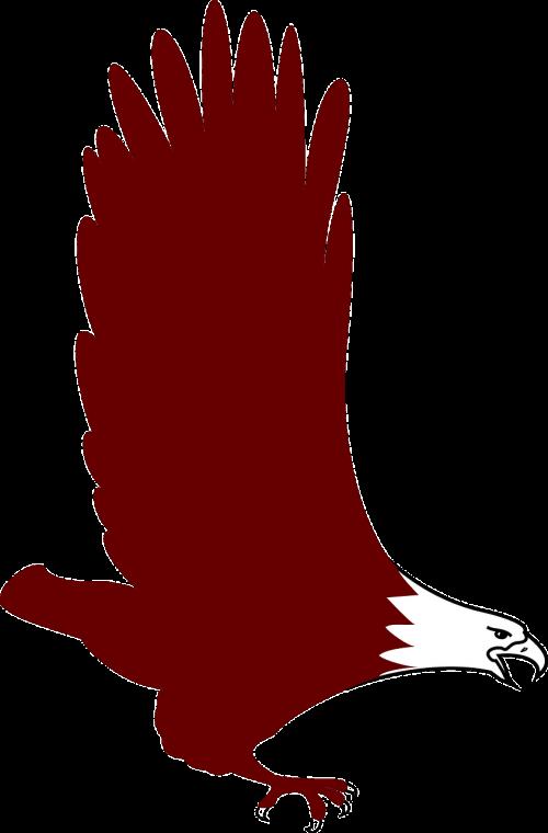 eagle bird flying