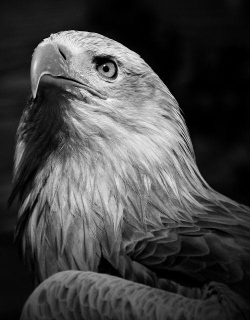eagle bird outside