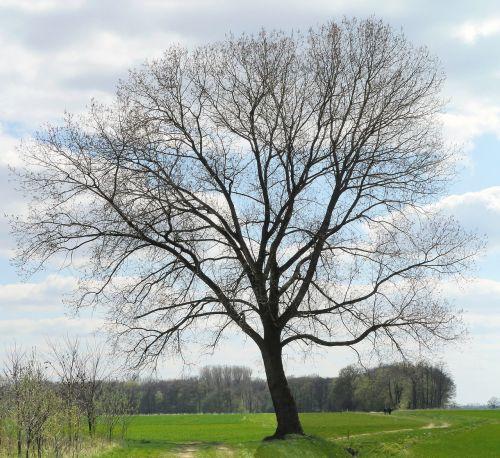 early spring foliation tree