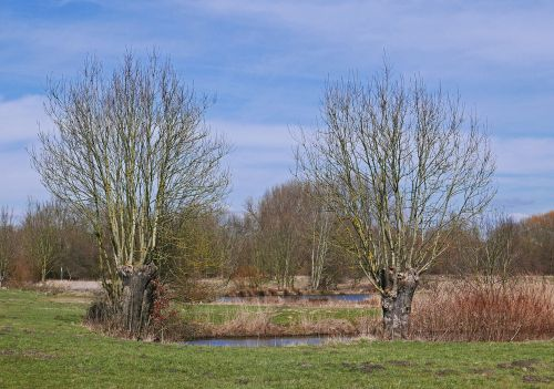 early spring in the biotope nature reserve pond