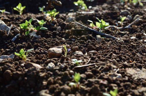earth soil campaign