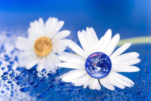 earth moon flower
